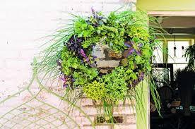 Diy Herb Garden Diy Herb Garden Living Wreath Backyard Projects Birds And Blooms