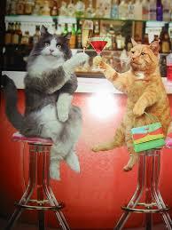 otok design birthday cards with cats