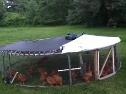 Trampoline Backyard Re Purposed Trampoline To A Chicken Tractor Backyard Chickens