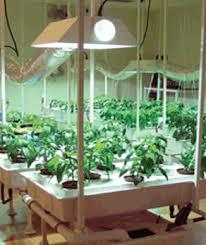 600 watt grow light bulb 600 watt super sun ii lumatek grow light system growsetup