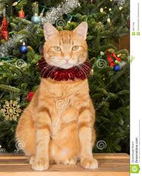 orange tabby cat sitting in front of a christmas tree stock photo