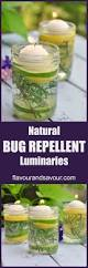 best 25 insect repellent ideas on pinterest natural bug killer