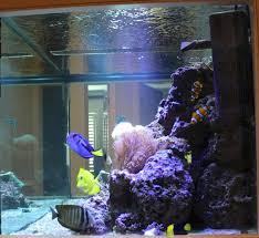 Home Aquarium by The Gracious Posse Tag Home Aquarium