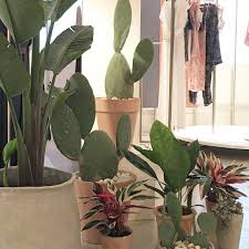 Nice Clothing Stores For Women Plants In A Fashion Store Great Clothing Stores Pinterest