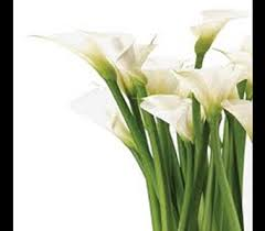 florist raleigh nc wholesale stems delivery raleigh nc raleigh florist