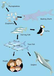 Food Chains Worksheet Shark Food Chain