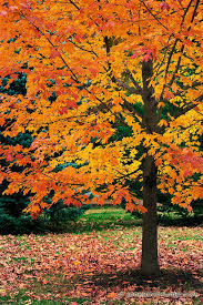 tree care and fall fertilization abs tree care tree service omaha