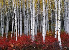 Utah forest images Utah art fine art america jpg