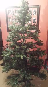 will deliver to brighton hove 7ft large tree