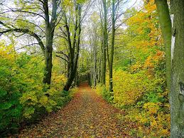 road forest trees free photo on pixabay