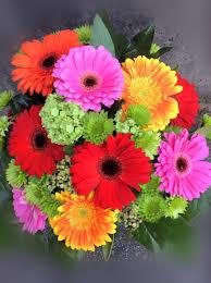 gerbera daisies glorious gerbera daisies bee flowers vancouver flower