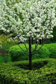 shrub and small tree trimming lawn service nashville tn