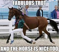 Horse Riding Meme - horse humor nice trot lol beautiful horses oh my pinterest