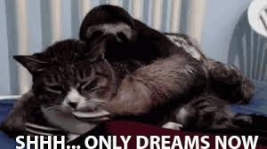 Sleepy Memes - sleepy time sloth kill the hydra