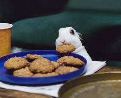 rabbit cookies bunny rabbit stealing cookie by kem sypher simply irresistible