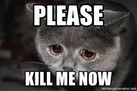 Please Kill Me Meme - please kill me now sad cat meme generator