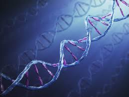 biology livebinder
