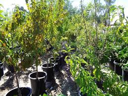 leaf network linking edible arizona forests acquire trees