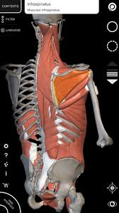 The Human Anatomy Muscles Muscular System 3d Atlas Of Anatomy Muscles And Bones Of The