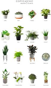 home trends our favorite chic indoor plants and modern planters