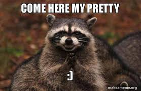 Pretty Meme - come here my pretty evil plotting raccoon make a meme