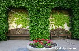 enclosed courtyard wall planting ideas