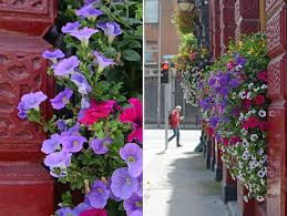 Hanging Flowers Dublin U0027s Hanging Flowers O U0027neill U0027s Pub And Guest Rooms U2013 From