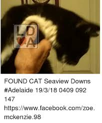 Mckenzie Meme - found cat seaview downs adelaide 19318 0409 092 147
