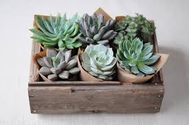 succulent centerpieces make your own succulent centerpiece