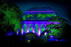 enchanted forest of light tickets where to enjoy the best winter light displays in scotland this