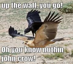 Crow Meme - 30 most funny bird meme pictures of all the time