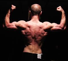 tree back bodybuilding com forums