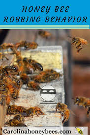 511 best buzzin about honey images on pinterest backyards great