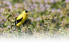 mississippi native plants native plants for native birds audubon minnesota