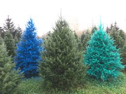 real christmas trees real colored christmas trees now in cny