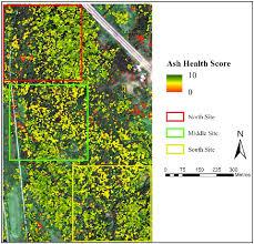 Emerald Ash Borer Map Remote Sensing Free Full Text Ash Decline Assessment In