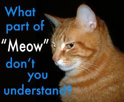 Meme Translation - is meme translation on topic english language usage meta stack