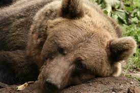 Sad Bear Meme - v video games thread 333978334