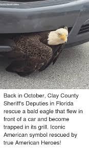 Freedom Eagle Meme - freedom eagle meme the best eagle of 2018