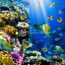 images of sealife murals tropical fish sc coral colony and coral fish wall mural coral colony and
