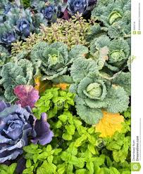 fall summer vegetable garden vegetable garden for summer the