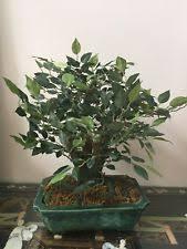 tree faux silk floral décor ebay