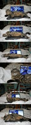 Cat Laptop Meme - cat on your laptop funny pictures cats other pinterest