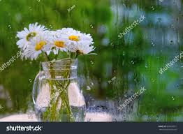 bouquet daisies vase behind rainy glass stock photo 666976591