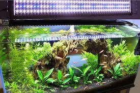 live plants in community aquariums lighting requirements
