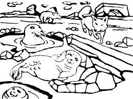 a group of arctic animals coloring page a group of arctic animals