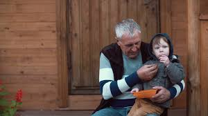 grandfather s cute little boy sitting on grandfather s lap and eating berries from