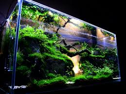 Aquascape Design Aquarium Aquascape Tropical Ocean Salfwater Aquarium Canopy