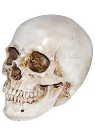 deluxe realistic skull decoration halloween decoratives