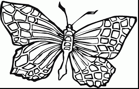 fabulous butterfly outline clip art with butterfly coloring page